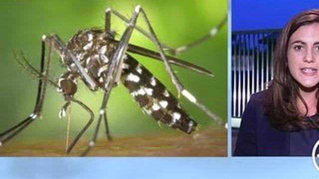 Paris : alerte au moustique tigre