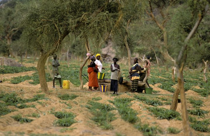 Des femmes autour d'un puits communalà Ibi,un village du pays dogon. Au cœur du Mali, l'eau permet de cultiver le mil. (PHILIPPE ROY / PHILIPPE ROY)