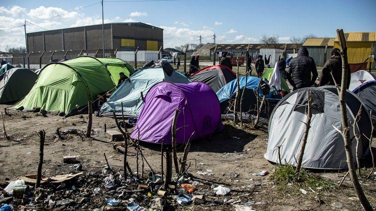 Les migrants délogés avaient installé leurs tentes au bord d'une route départementale, à Calais. (photo d'illustration) (SEBASTIEN COURDJI / EPA)