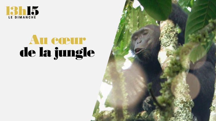 Au cœur de la jungle (CAPTURE ECRAN / 13H15 / FRANCE 2)