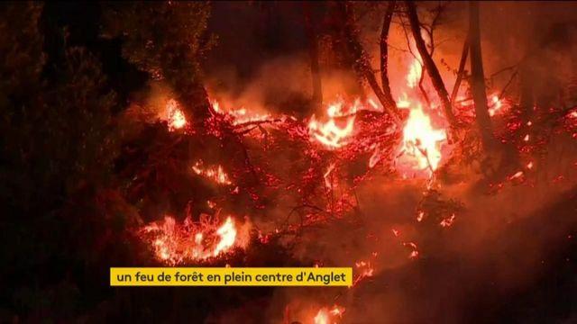Pyrénées-Atlantiques : un important feu ravage la fôret à Anglet