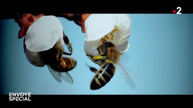 Envoyé spécial. Un monde sans abeilles ?