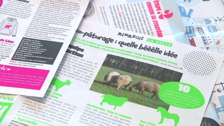 Fritz, nouveau venu dans le monde de la presse locale à Tours (France 3 Centre-Val de Loire)