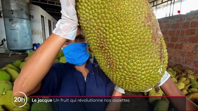 Alimentation : le jacque, un fruit qui révolutionne nos assiettes