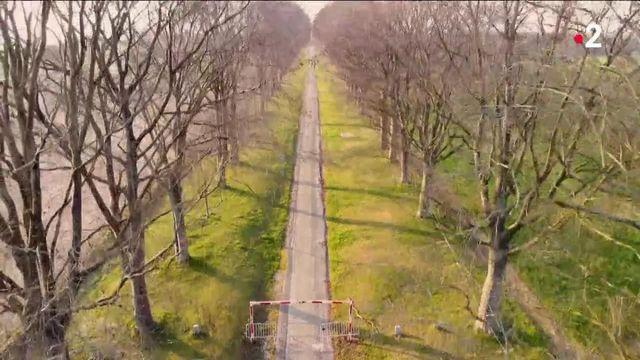 Engagement : les Français se mobilisent pour leurs arbres