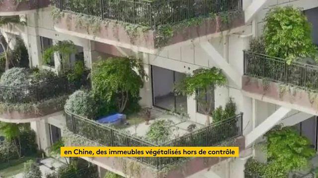 ftvi mod immeubles végétalisés Chine