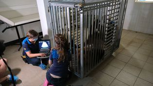 La gestation du panda ne dure que cinq semaines. (BASTIEN MOIGNOUX / MAXPPP)