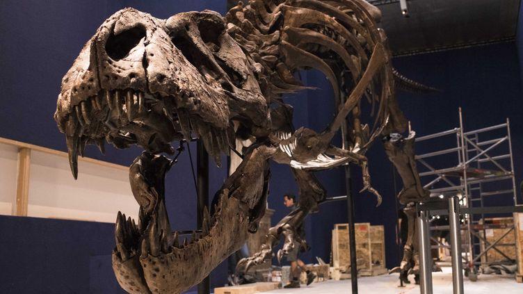 Trix, une femelle tyrannosaure disparue il y a 67 millions d'années.  (MNHN-A latzoura)