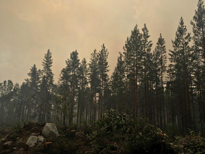 La forêt de Ljusdal en Suède, le 25 juillet 2018. (ELISE LAMBERT/FRANCEINFO)