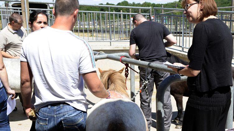 """Des militaires atteints de stress post-traumatique participent à uneséance de """"thérapie avec le cheval"""" sont proposées à Metz, le 26 juin 2014. (JEAN-CHRISTOPHE VERHAEGEN / AFP)"""