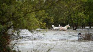 Des chevaux dans un champ inondé, le 14 septembre 2021 à Aimargues (Gard). (SYLVAIN THOMAS / AFP)