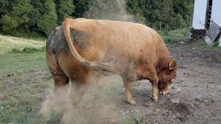 L'animal a perturbé la circulation sur la nationale 165 à Quimper (Finistère). (photo d'illustration) (MAXPPP)