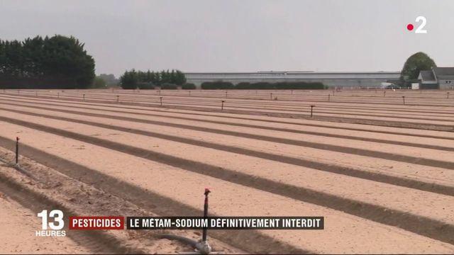 Agriculture : le pesticide métam-sodium définitivement interdit