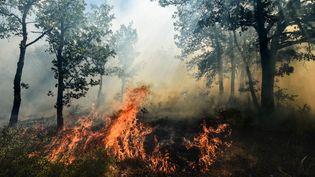 Un incendie consume les forêts d'Artigues (Var), le 25 juillet 2017. (ANNE-CHRISTINE POUJOULAT / AFP)