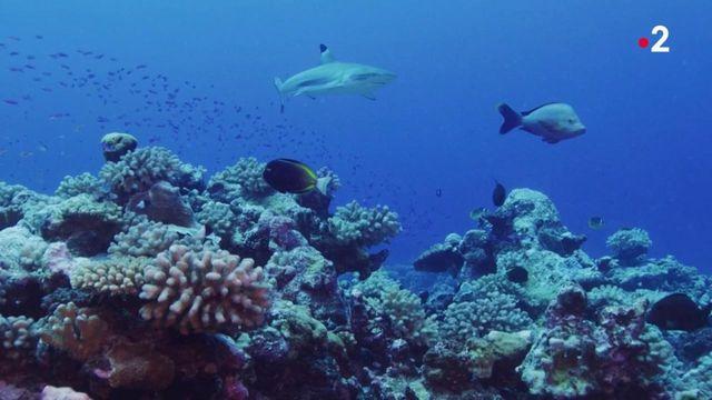Plongée : une capsule pour vivre quelques jours au milieu des poissons