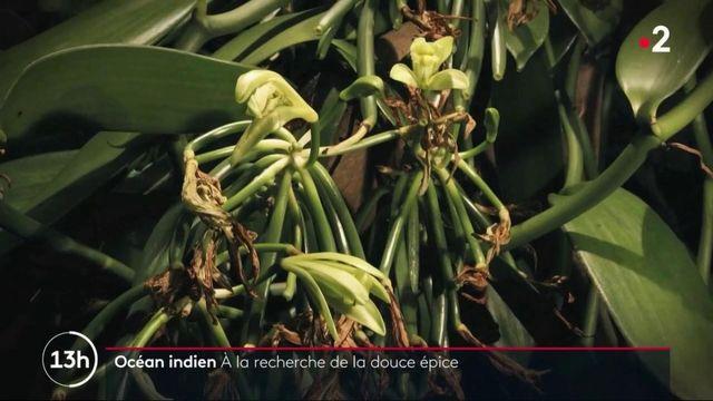 La vanille : les plantations précieuses de Madagascar et de la Réunion