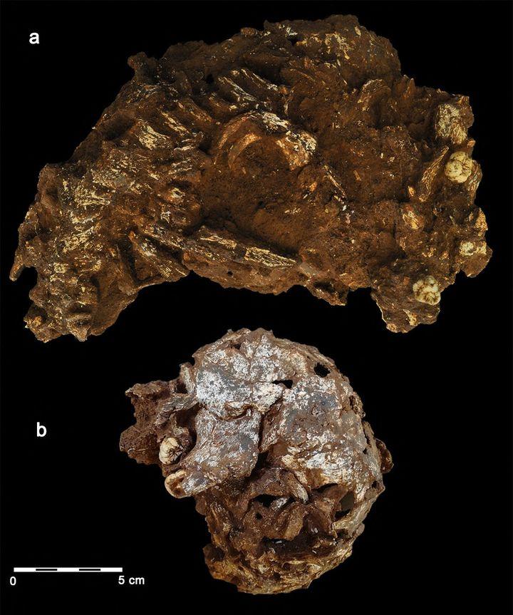 Les restes de cet enfant de 3 ans, mort il y a 78 000 ans. (JORGE GONZALEZ/ELENA SANTOS / AFP)