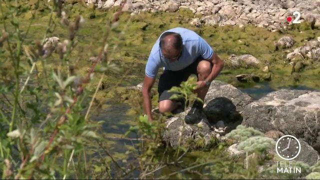 Canicule : la crainte d'une nouvelle sécheresse dévastatrice