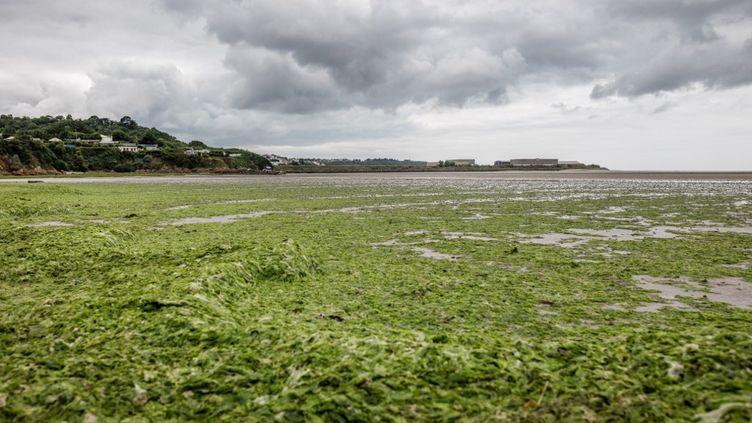 Une invasion d'algues vertes dans la baie de Saint-Brieuc (Côtes-d'Armor), le 9 juillet 2021. (BAPTISTE ROMAN / HANS LUCAS / AFP)