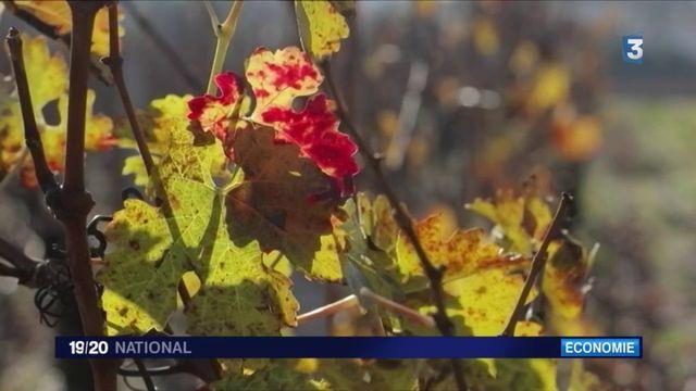 Investissements : les fortunes chinoises s'arrachent les vignobles du Bordelais