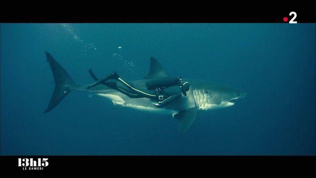 """VIDEO. L'océanologue François Sarano réhabilite les requins qui souffrent d'une mauvaise réputation depuis le film """"Les Dents de la mer"""""""