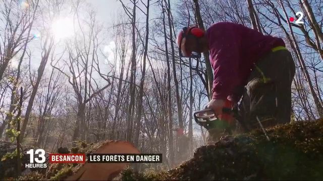 Besançon : les forêts en danger