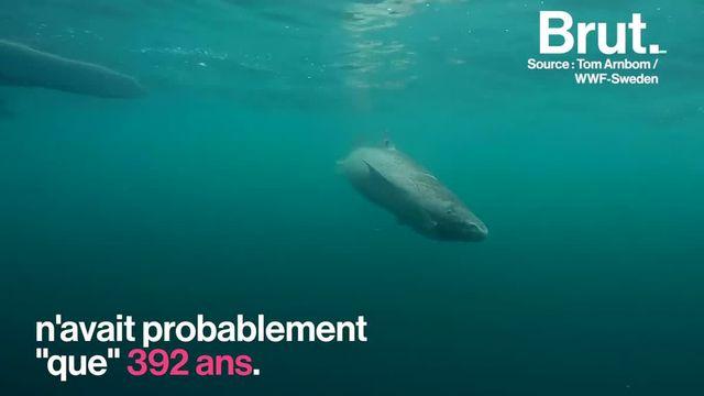 Selon certains articles, un requin du Groenland aurait fêté ses 512 ans, une information jugée fallacieuse par la communauté scientifique.