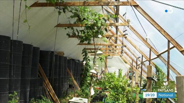 Environnement : dans le Vaucluse, des serres bioclimatiques qui se chauffent naturellement