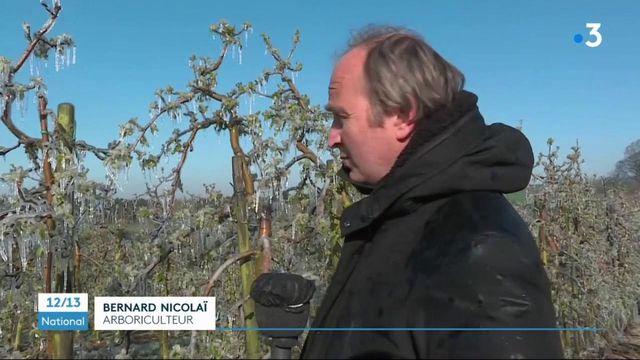 Agriculture : le retour du gel détruit des vergers