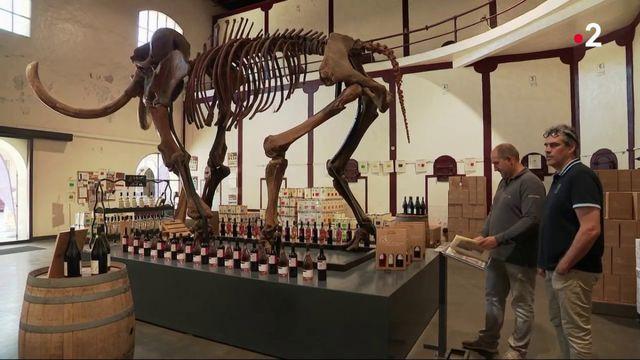 Collectionneurs : un dinosaure dans son salon