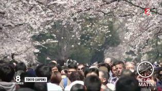 Les Japonais admirent les cerisiers en fleurs. (FRANCE 2)