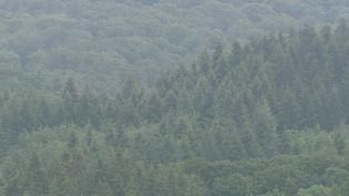 Dans l'ouest de l'Allemagne, près des frontières belge et luxembourgeoise, le sol se soulève. Certains spécialistes craignent qu'un volcan s'éveille. (France 2)