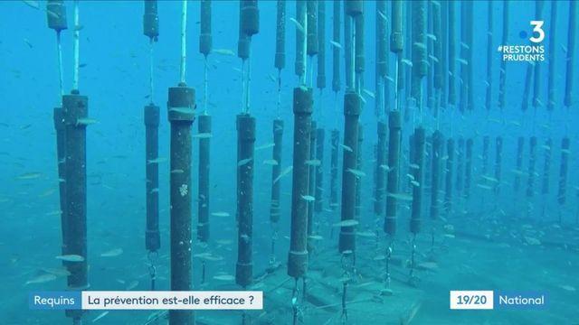La Réunion : une pêche préventive pour lutter contre les attaques de requin