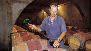 Un viticulteur dans les Pyrénées-Atlantiques. (FRILET PATRICK / HEMIS.FR / AFP)