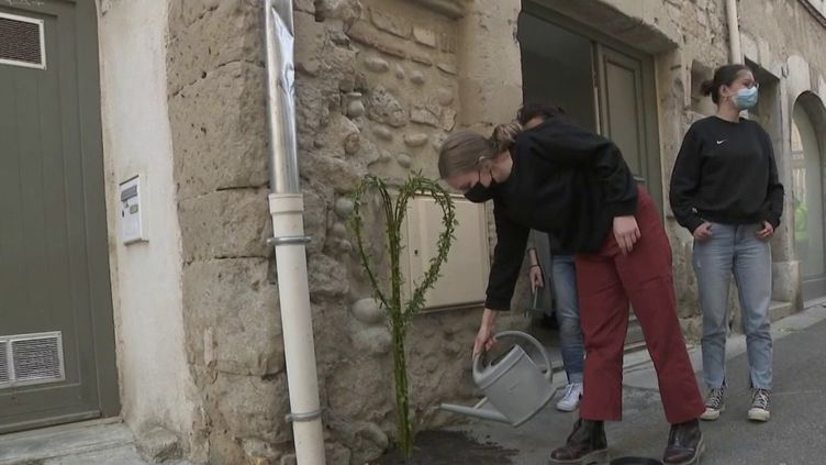 À Valence (Drôme), les habitants ont décidé de remplacer le goudron par des rosiers pour revitaliser les rues piétonnes de la ville. (CAPTURE ECRAN FRANCE 2)
