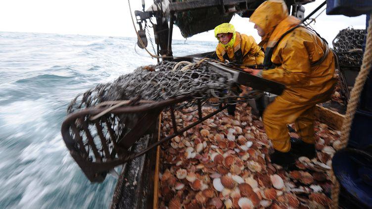 """A bord du chalutier """"Anthineas"""", durant une journée de pêche aux coquilles Saint-Jacques dans la baie de Saint-Brieuc (Côtes-d'Armor). (MARCEL MOCHET / AFP )"""