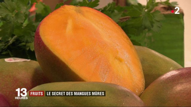 Fruits : le secret des mangues mûres importées