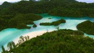 Indonésie : nager avec les méduses à Kakaban (FRANCE 2)