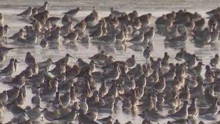 #DécouverteWE : l'île de Ré, un lieu de rêve pour les oiseaux (FRANCE 3)