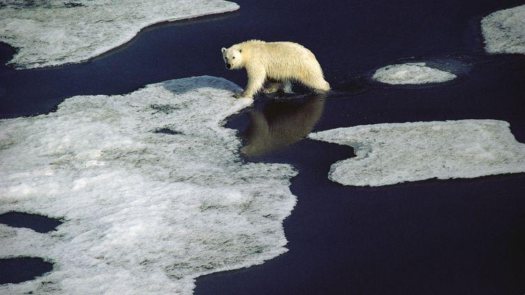 Un ours polaire se déplace sur la banquise, dans la région duNunavut au Canada. (JIM BRANDENBURG / MINDEN PICTURES)