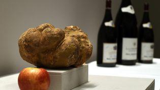 La plus grosse truffe blanche au monde, vendue aux enchères vendredi 5 décembre à New York (Etats-Unis) par Sotheby's. (TIMOTHY A. CLARY / AFP)