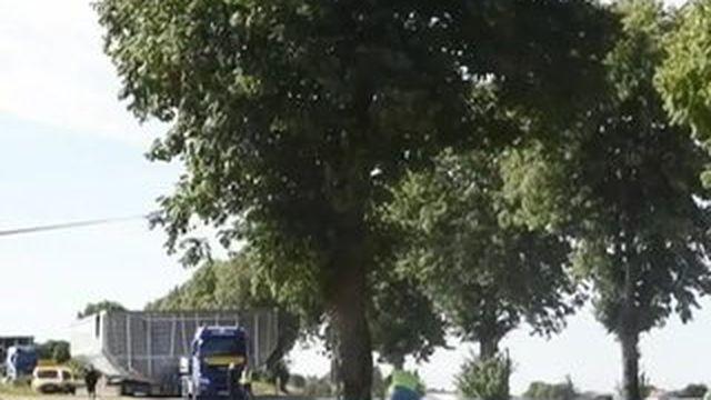 Une trentaine d'arbres abattus à l'entrée de Luçon
