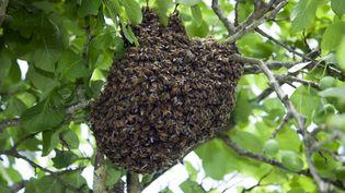 Un essaim d'abeilles (illustration). (CHRISTIAN WATIER / MAXPPP)