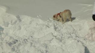 Un chien dressé pour retrouver les personnes coincées sous une coulée d'avalanche (CAPTURE ECRAN FRANCE 2)