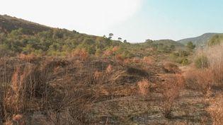 La Corse du Sud est sous le coup d'incendies lundi 25 février, et les départs de feu auraient pour origine l'écobuage, une pratique en question. (CAPTURE D'ÉCRAN FRANCE 3)