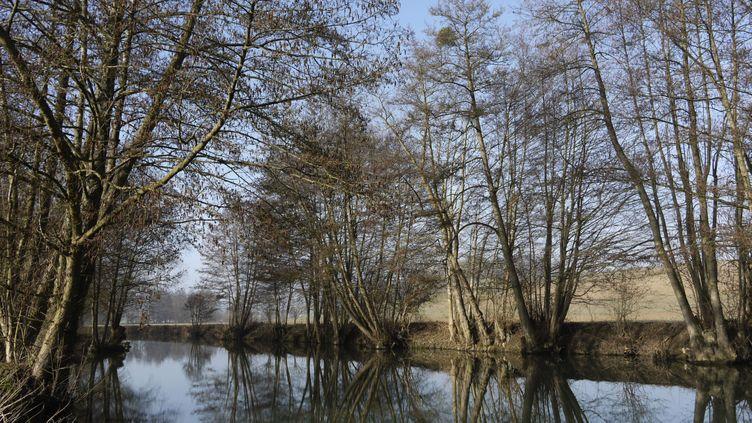 (Le projet de complexe touristique sera situé en Seine-et-Marne, à six kilomètres de Disneyland Paris © Maxppp)