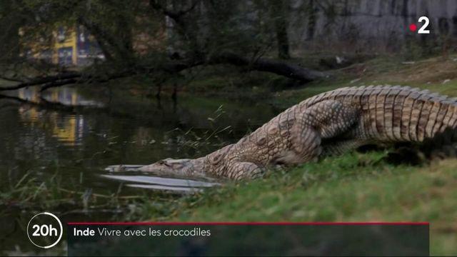 Inde : dans un village de l'ouest, les habitants cohabitent avec les crocodiles