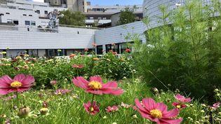 Cosmos, reine-marguerites, zinnias... fleurissent sur le toit de l'hopital Robert-Debré. (ISABELLE MORAND / FERME FLORALE URBAINE / RADIO FRANCE / FRANCE INFO)