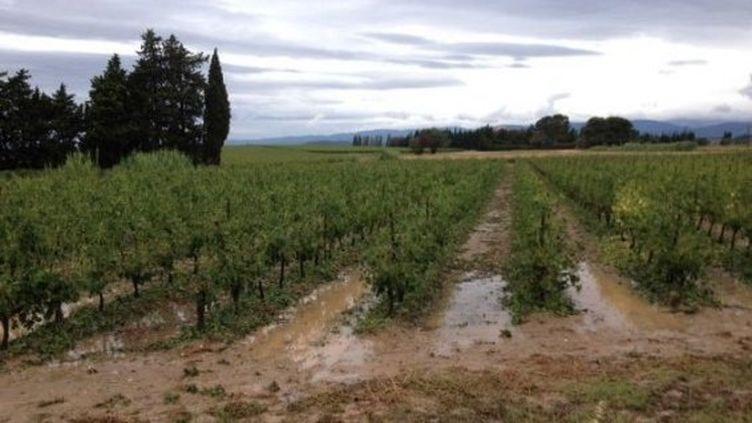 Les vignes inondées à Puichéric (Aude) après l'orage du 7 juillet 2014. (FREDERIC GUIBAL / FRANCE 3 LANGUEDOC ROUSSILLON)