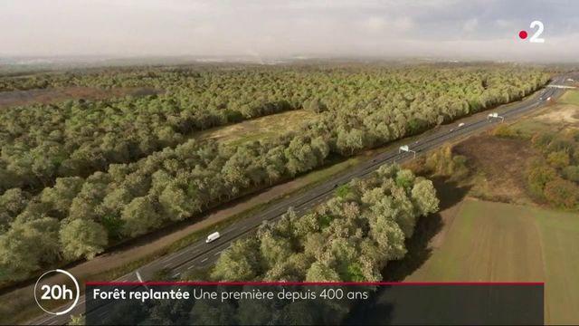 Forêt replantée dans le Val d'Oise : une première depuis 400 ans
